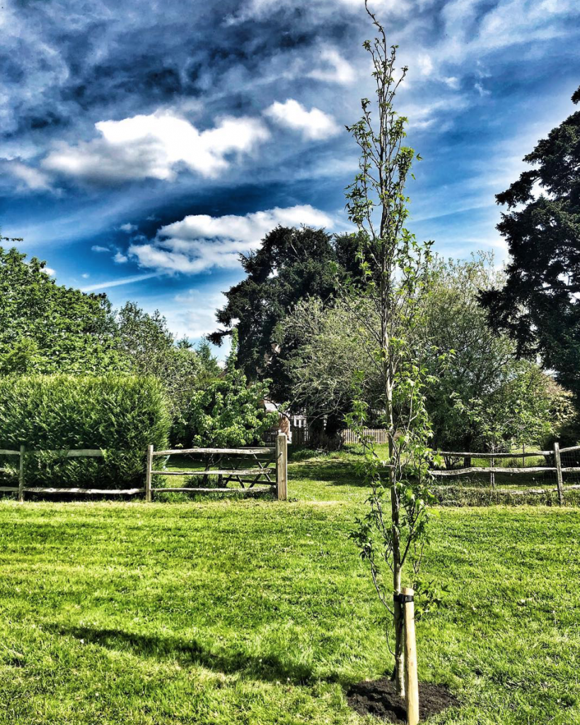 Simon Thomas, Gemma's tree in garden