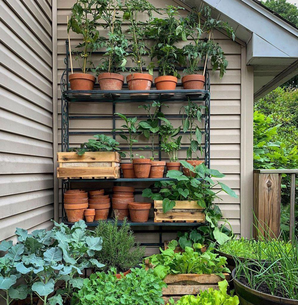 Brett Braley Palko potager garden shelving