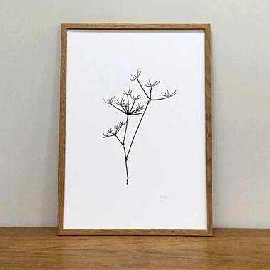 Aerende Botanical Cow Parsley Print