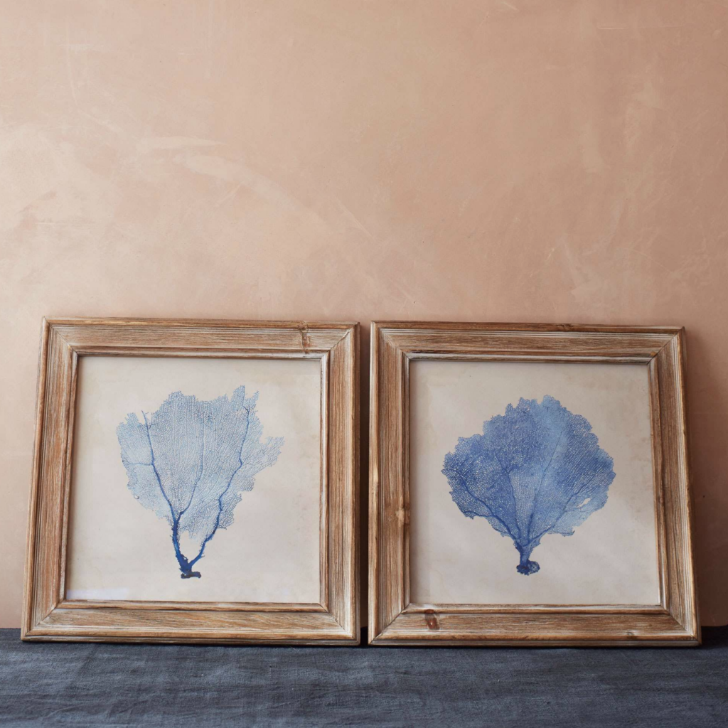 Blue coral framed pictures, £58 for set of two, Graham and Green