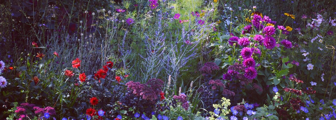 a herbaceous border in an English country garden