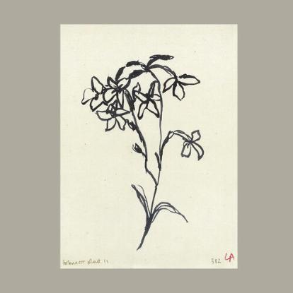 Tobacco Flower art print by Lucy Augé Atelier Augé