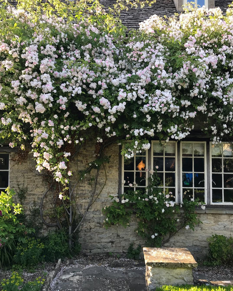 Roses climbing the walls of florist and author Willow Crossley's house in the Cotswolds
