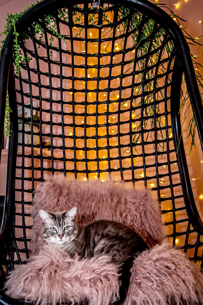 Natalie Lee Style Me Sunday's cat Dinky sitting in hanging chair © Wendy Aldiss Photography