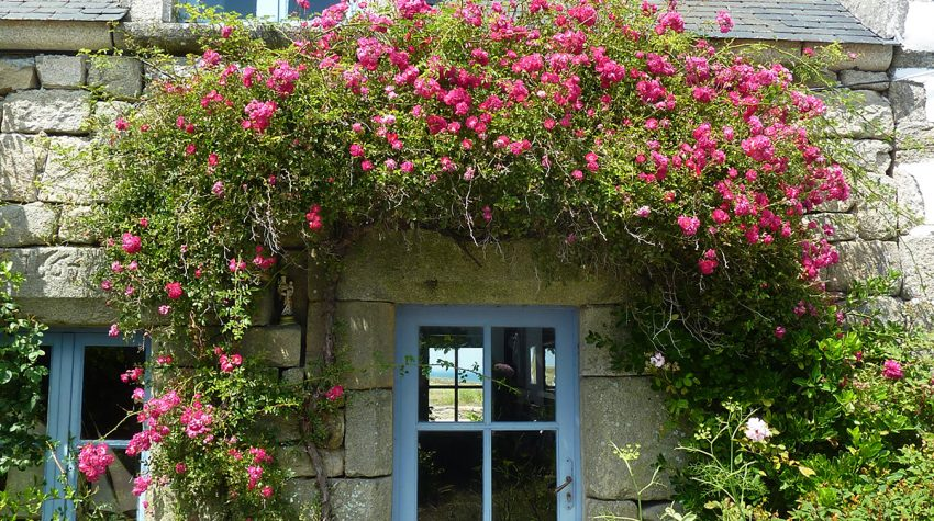 Stone country cottage with light blue front door and rose around the door by Alfred Lutz, Unsplash