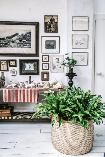 White room with wooden bench table filled with shells and objet, framed art and a giant fern in wicker basket, from the home of Joel Bernstein from Wild Interiors by Hilton Carter