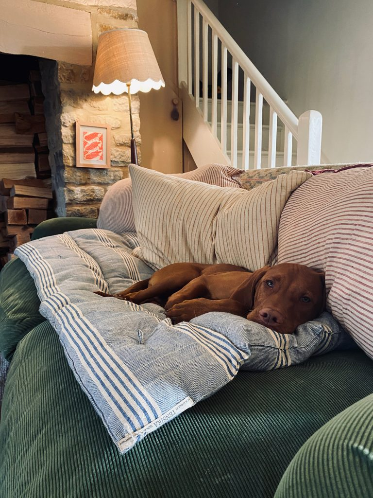 dog lying on green corduroy sofa with ticking stripe cushions in the Cotswolds home of interior designer Victoria Barker, founder of Studio Faeger