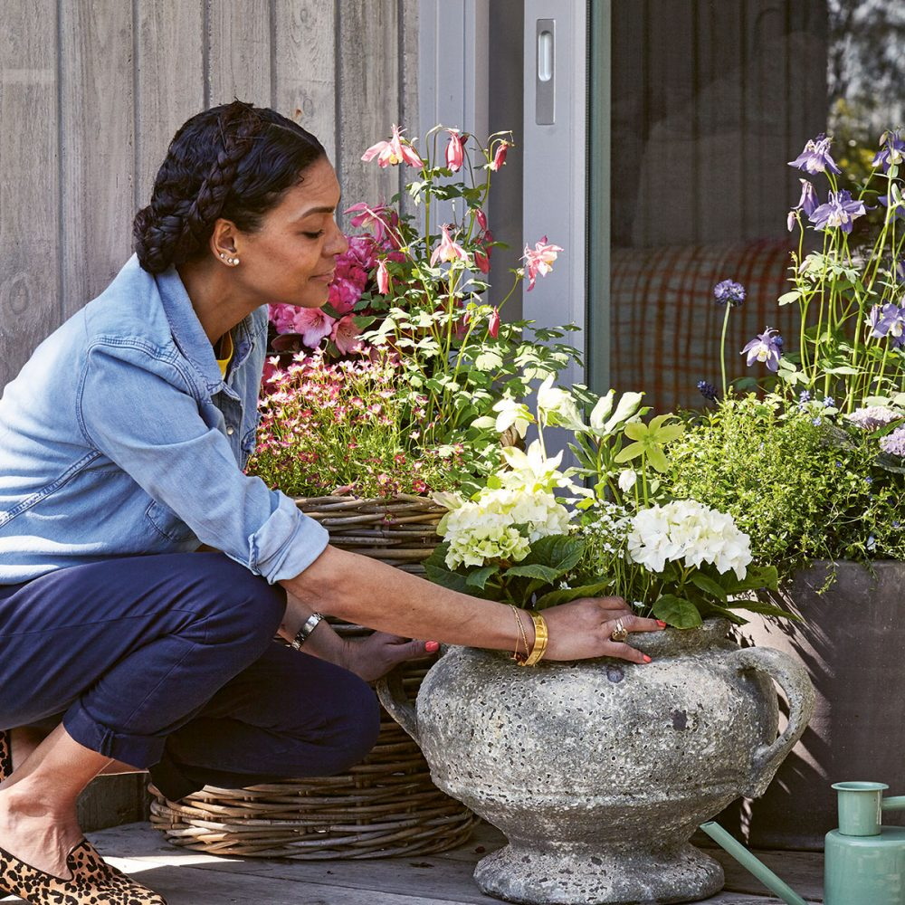 How To Grow Beautiful Cut Flowers in Containers