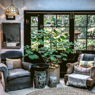 Vintage armchairs and fig plant in front of half glazed black patio doors overlooking leafy garden, at the home of Joel Bernstein from Wild Interiors by Hilton Carter