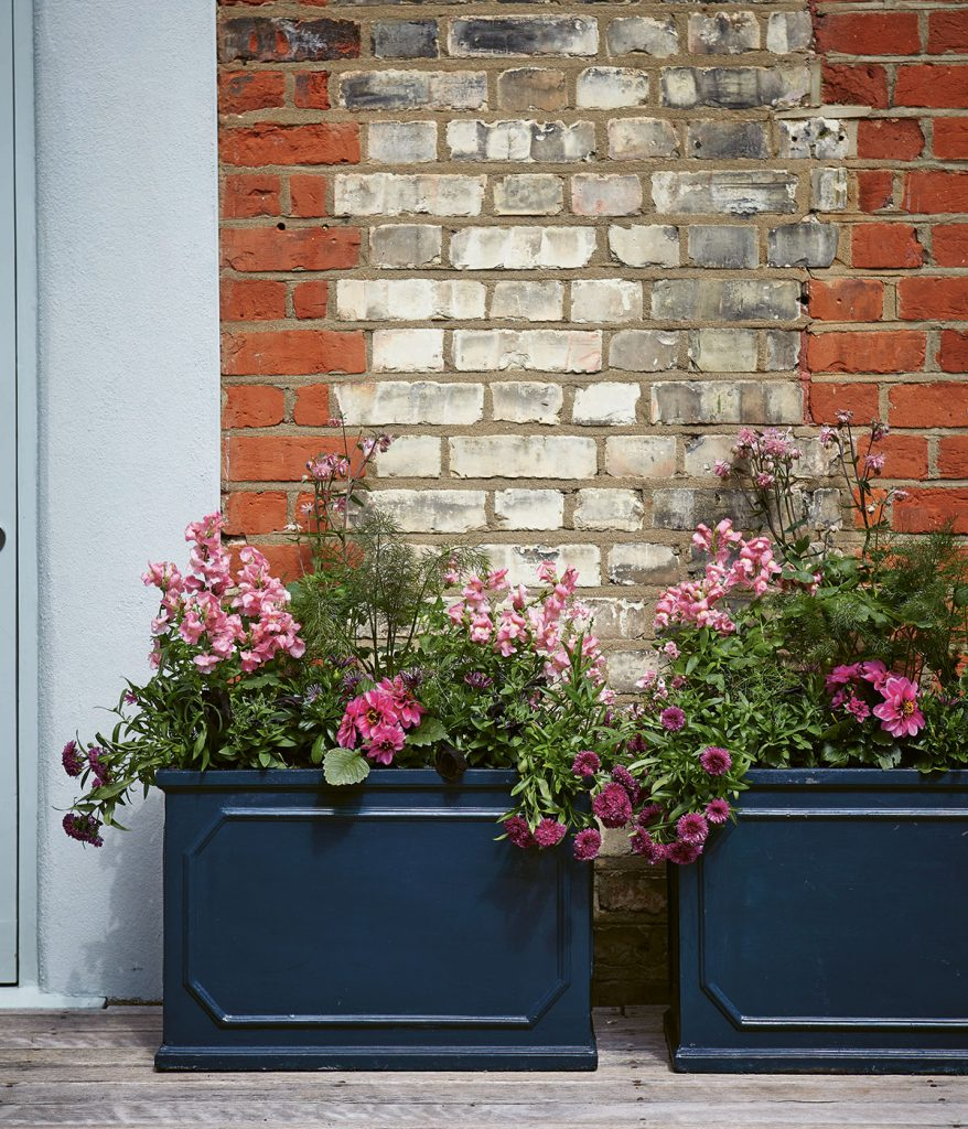 Black trough planters on decking against brick wall with Pink Snapdragon, Aster, Petunia and Dahlias, from Modern Container Gardening by Isabelle Palmer