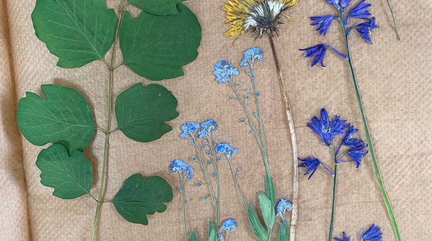 How To Home pressed flowers, bluebells, forget-me-nots, dandelion