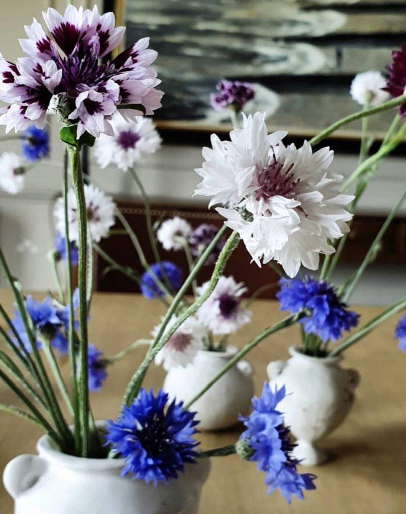 Kitten Grayson Flowers Cornflowers