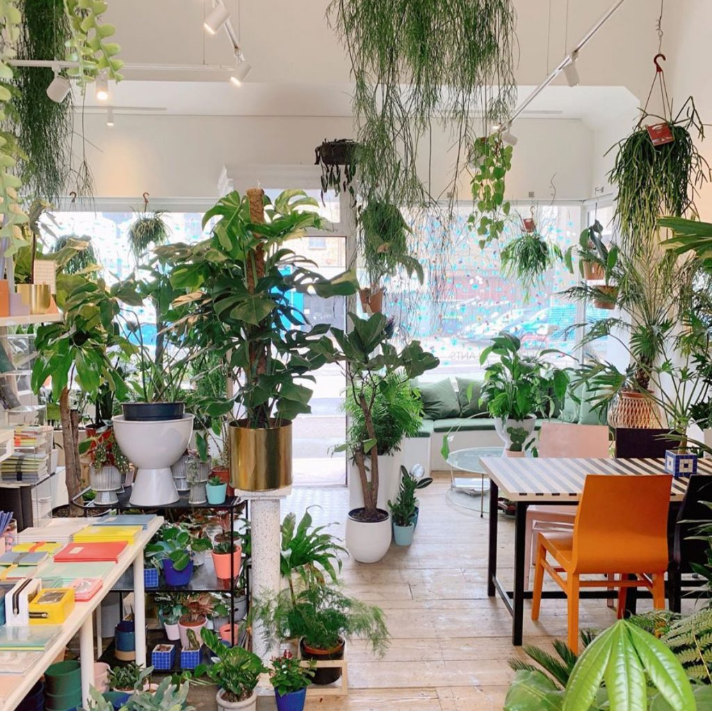 Inside of MarMar-plant and home store and cafe in-Margate, Kent