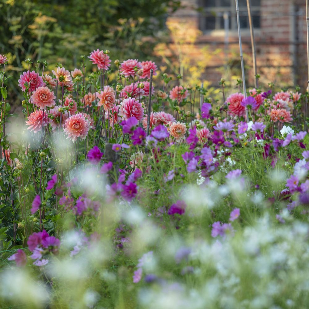 How to Create a Joyful Autumn Garden