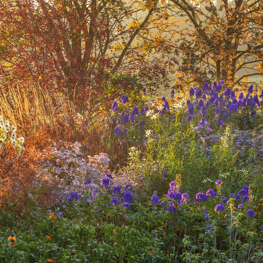 In Conversation with Clive Nichols, Britain's Best Garden Photographer