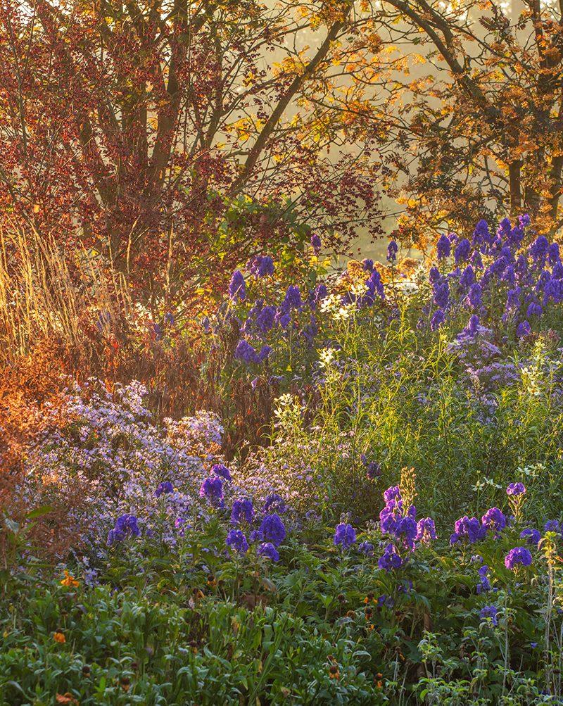 Autumn border at Pettifers garden © Clive Nicols