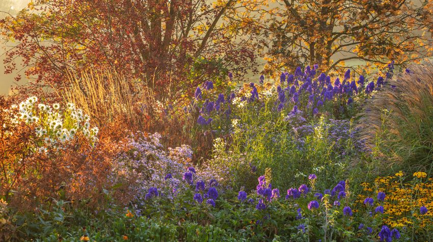 Autumn border at Pettifers garden © Clive Nicols