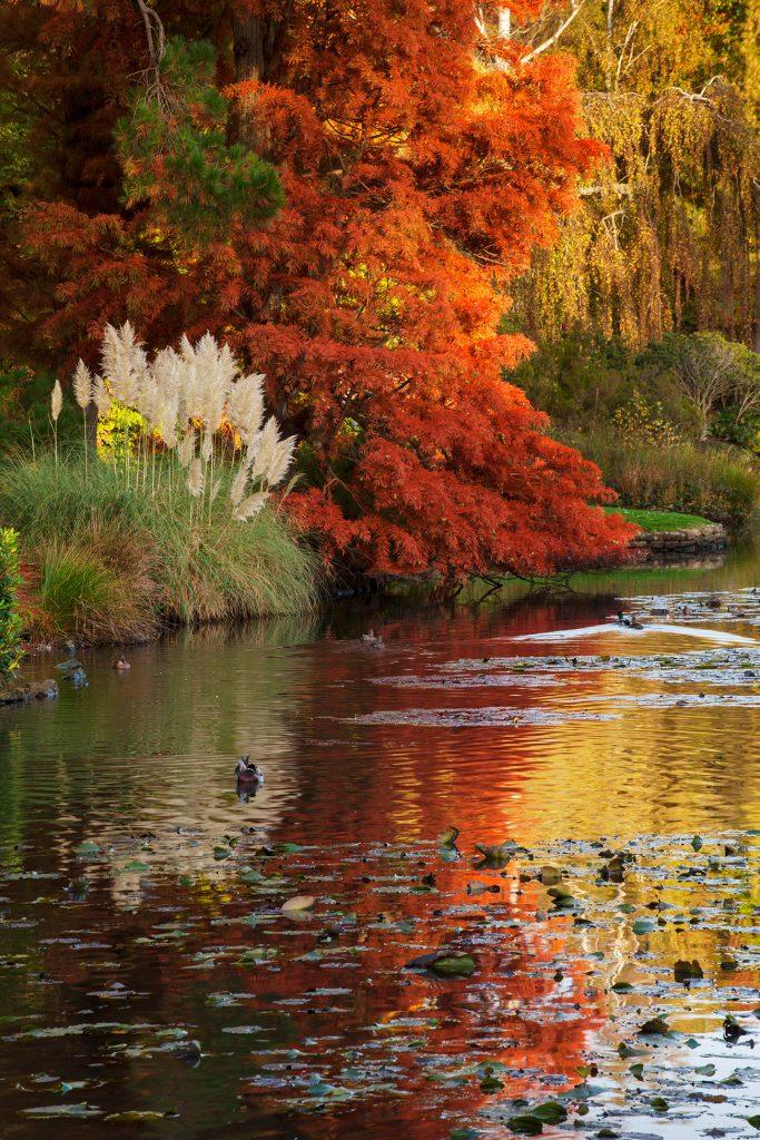 Sheffield Park in autumn © Clive Nichols