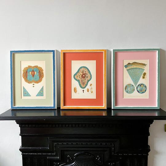 Spice prints Petri Prints