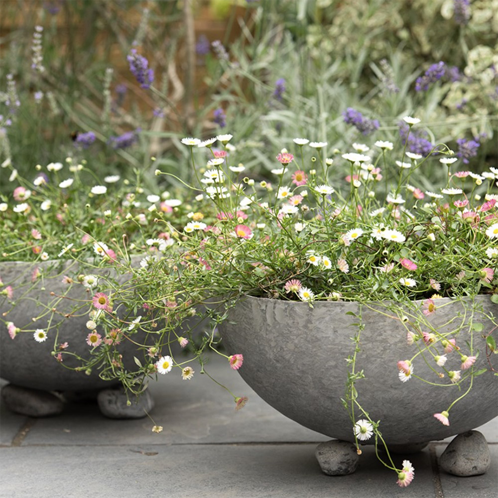 Sphere plant bowl, from £14.99, Crocus